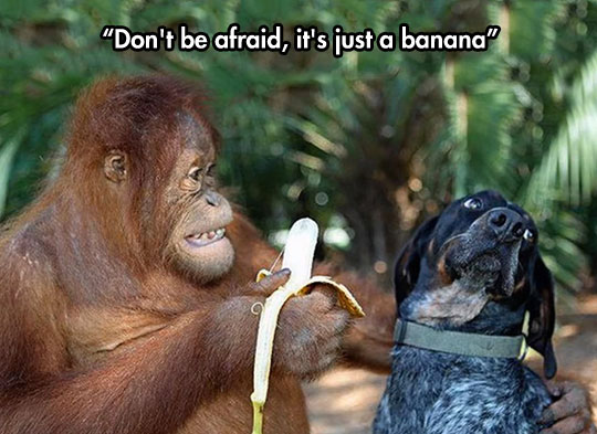cute-dog-monkey-feeding-banana