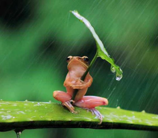 cute-frog-leaf-umbrella-rain