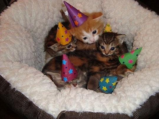 cute-kittens-party-hat-cuddling