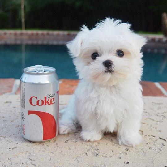 cute-little-puppy-soda-can