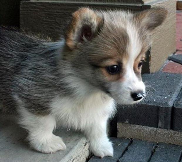 cutest-animals-ever-1