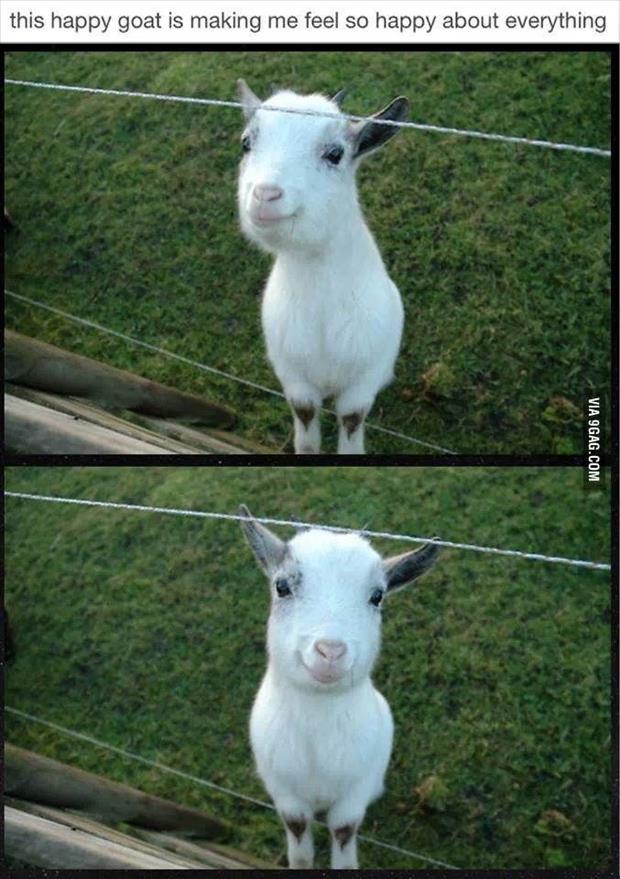 cutest-animals-ever-10