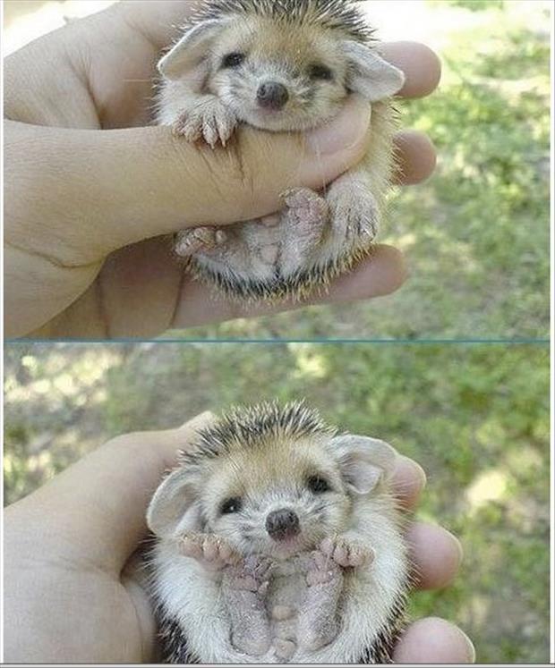 cutest-animals-ever-11