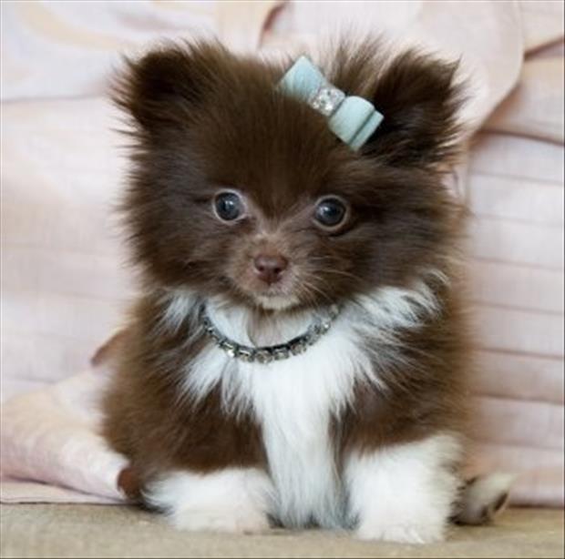 cutest-animals-ever-14
