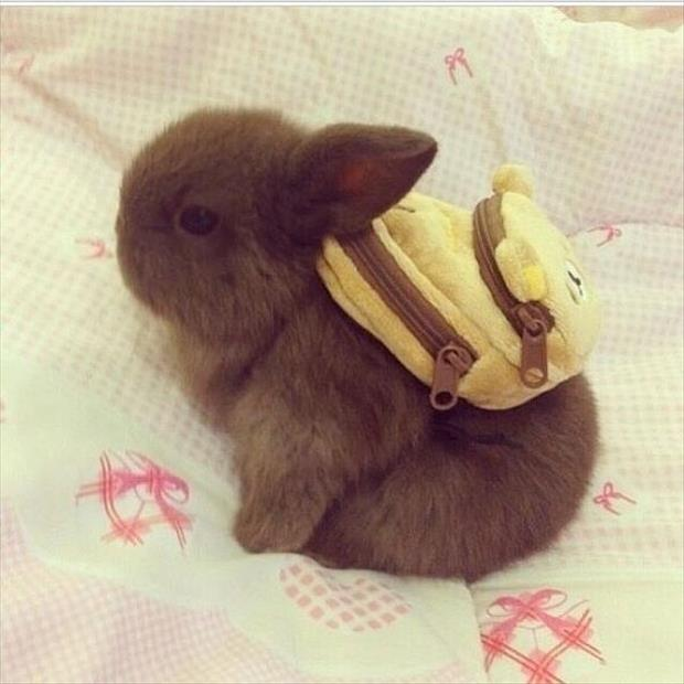 cutest-animals-ever-15