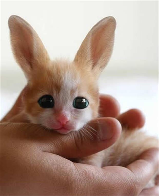 cutest-animals-ever-16