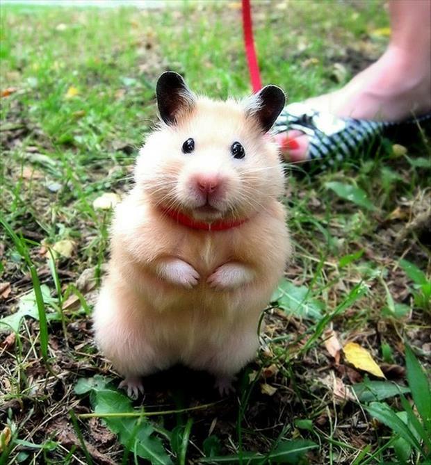 cutest-animals-ever-18
