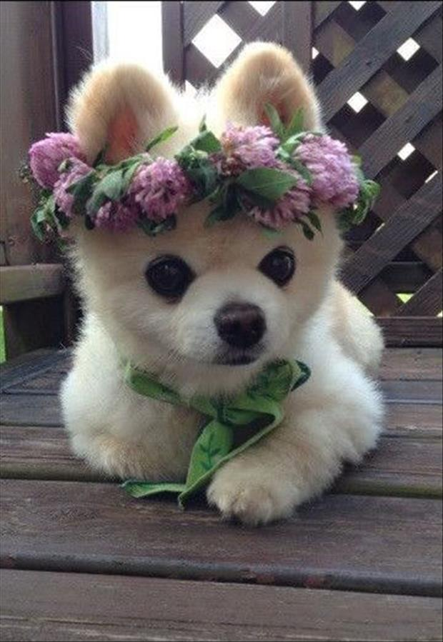 cutest-animals-ever-2
