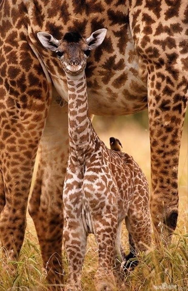 cutest-animals-ever-20