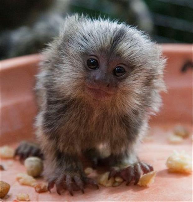cutest-animals-ever-21