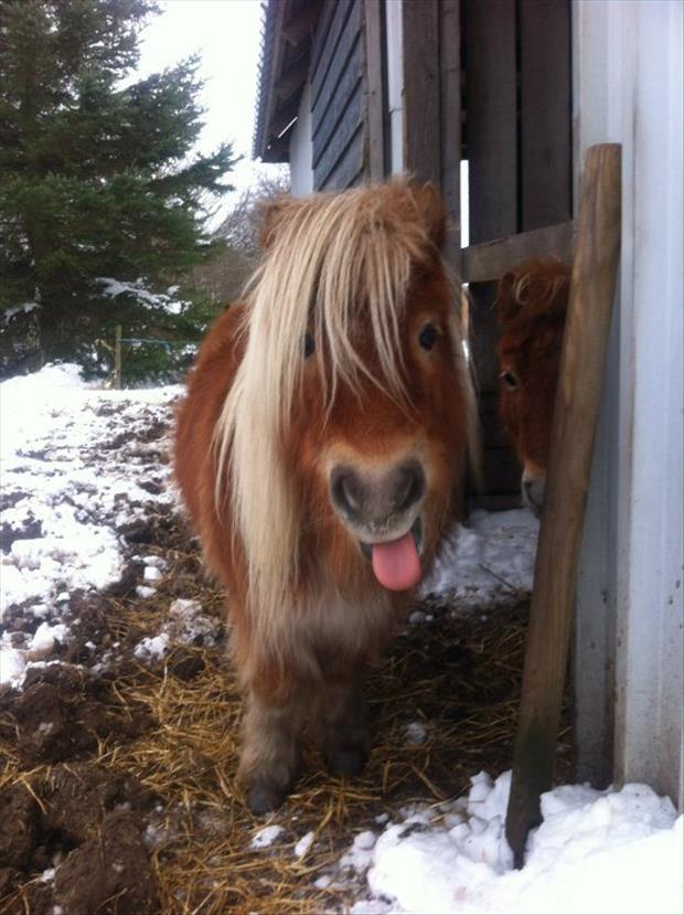 cutest-animals-ever-23