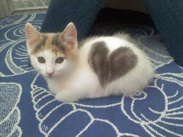 cutest-animals-ever-25