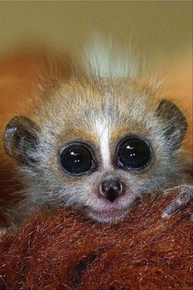 cutest-animals-ever-26