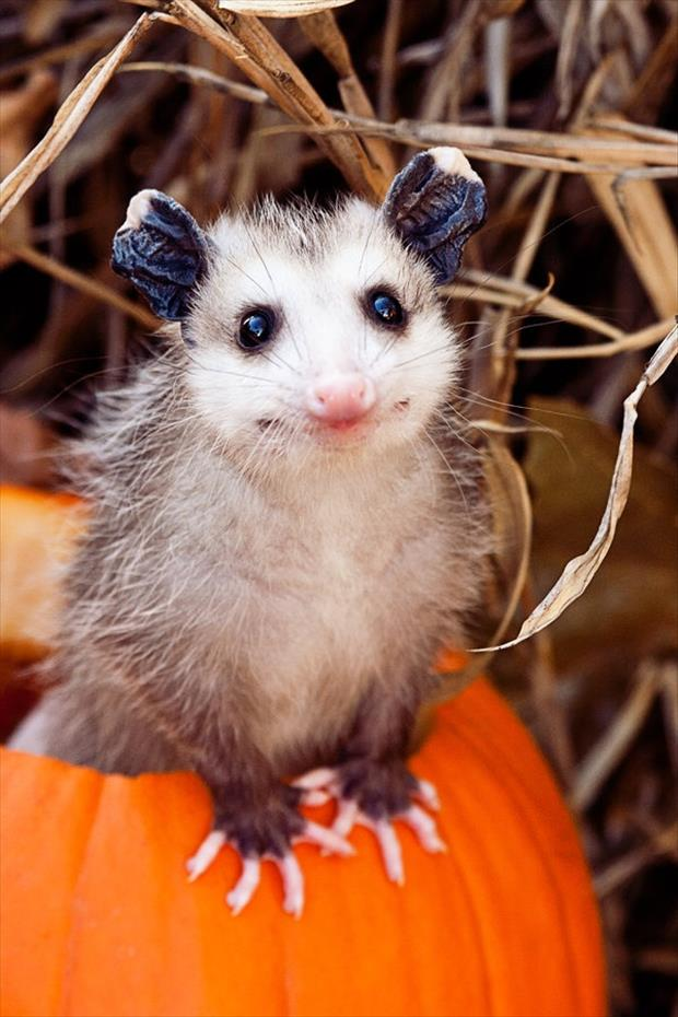 cutest-animals-ever-3