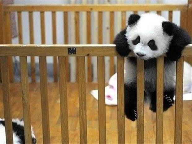 cutest-animals-ever-5