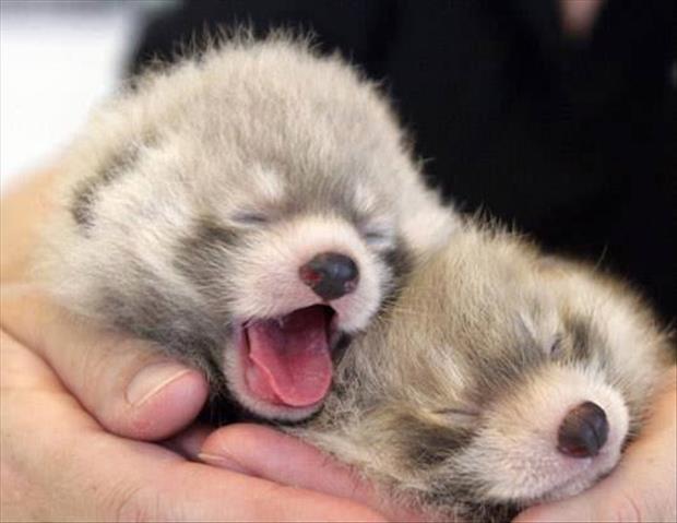 cutest-animals-ever-7