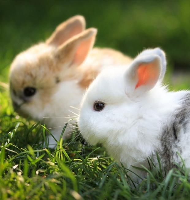 cutest-animals-ever-8