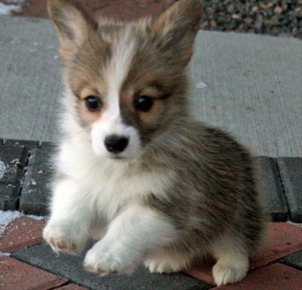 cutest-animals-ever-9
