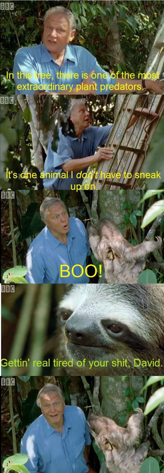 The Harasser Of Sloths
