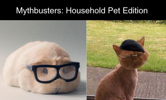 funny-Mythbusters-cat-pet-edition