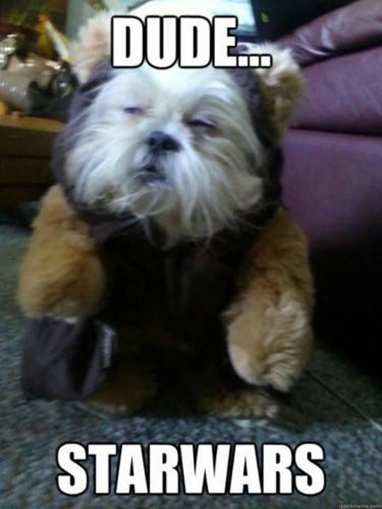 He's A Mixture Of An Ewok And Chewy