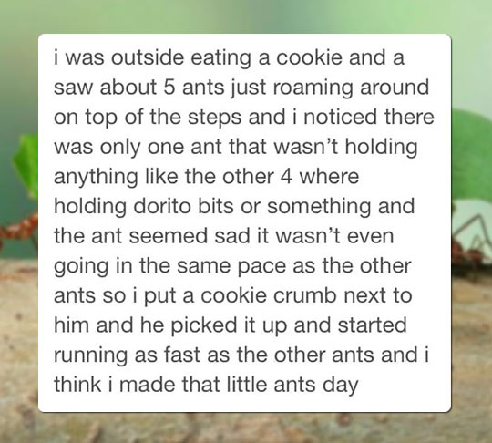 funny-ant-food-cookie-crumb