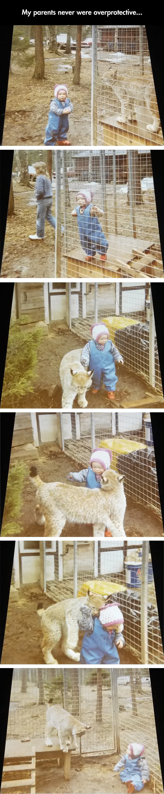 funny-baby-playing-lynx-cage