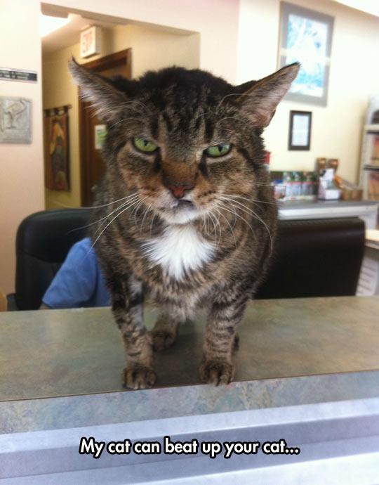funny-bad-cat-tough-face