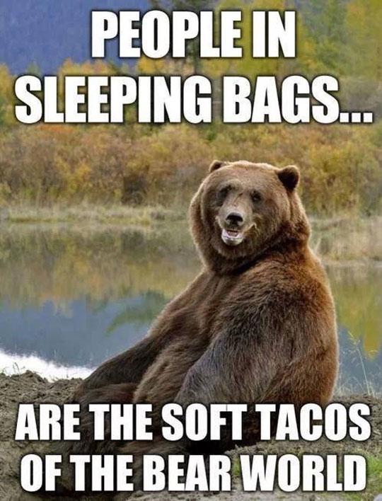 funny-bear-forest-sleeping-bag-taco