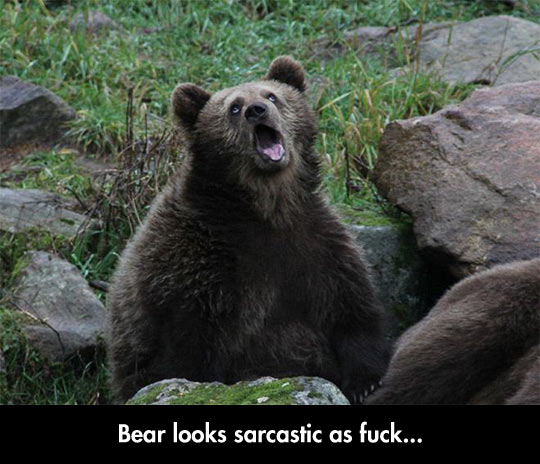 Sarcastic Captive Bear