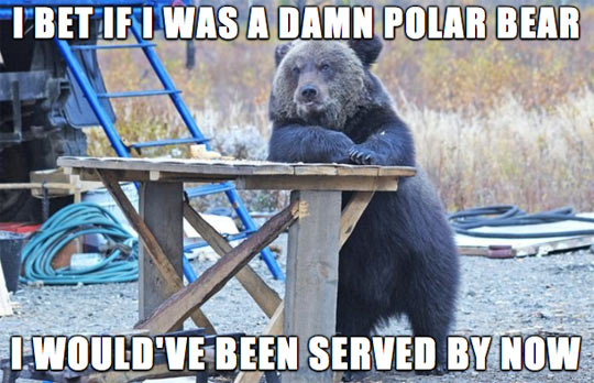 funny-bear-table-waiting-forest