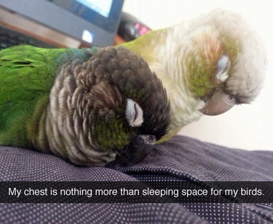Sleeping Birds
