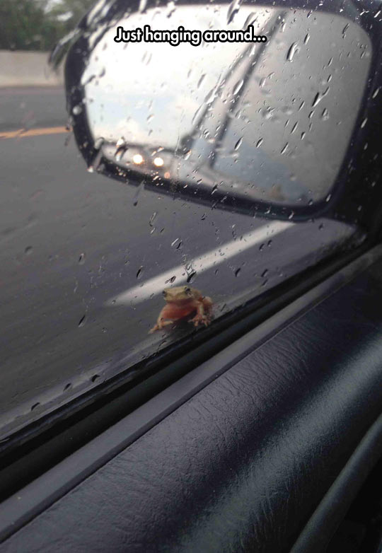 funny-car-frog-rain-ride-mirror