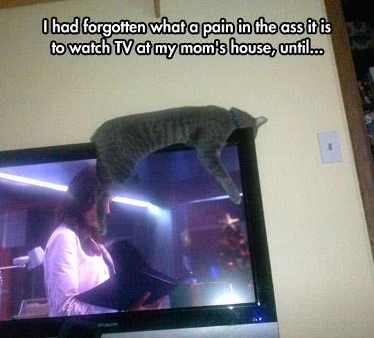 He Enjoys TV In A Different Way