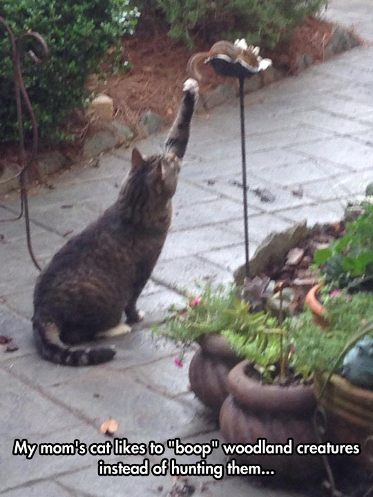 funny-cat-back-yard-playing