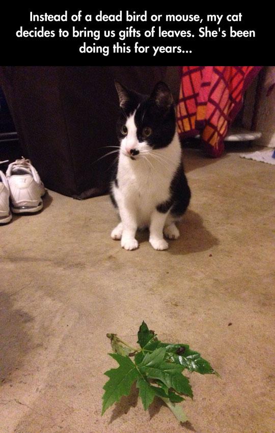 funny-cat-bringing-plant-leaves