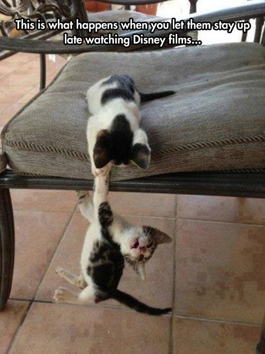 funny-cat-chair-kitten-Disney
