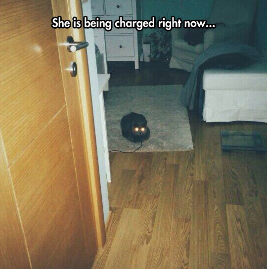 Always Remember To Charge Your Cat