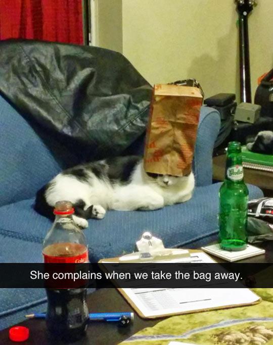 funny-cat-complains-paper-bag-head