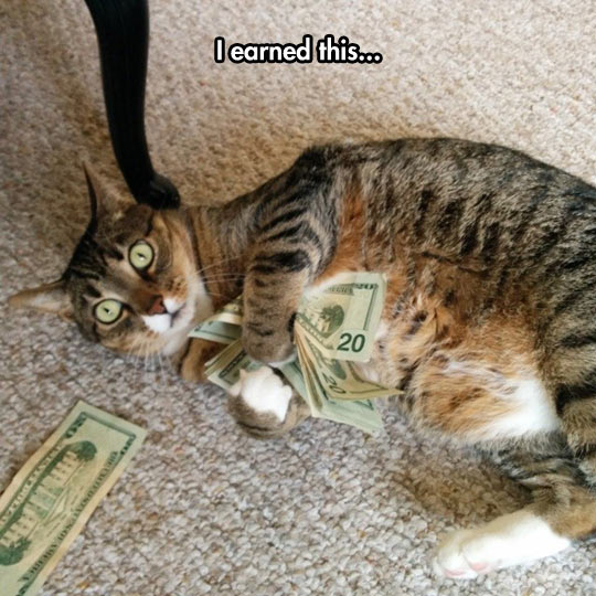 funny-cat-dollar-hugging-money