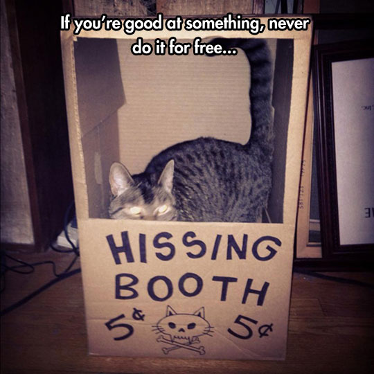 funny-cat-hissing-booth
