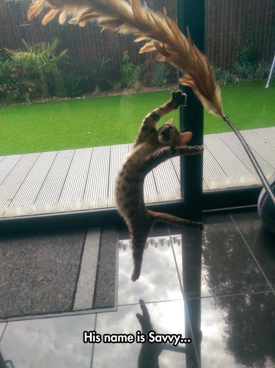 funny-cat-kitten-jump-feather