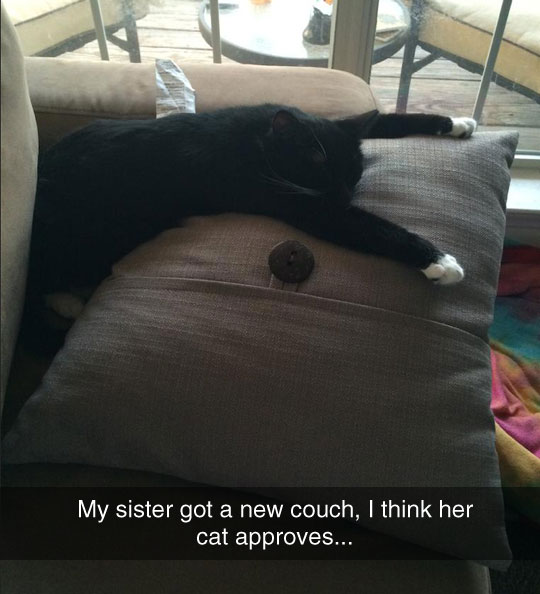 This Cat Is In Love With The Couch