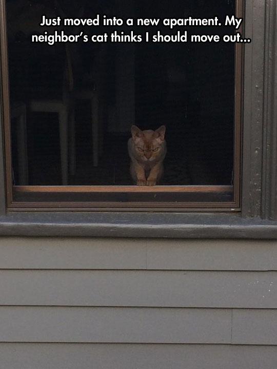 funny-cat-neighbor-windows-mad
