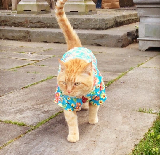 Just A Cat In A Hawaiian Shirt