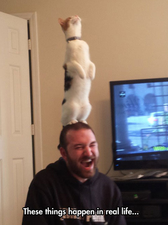 funny-cat-standing-head-owner