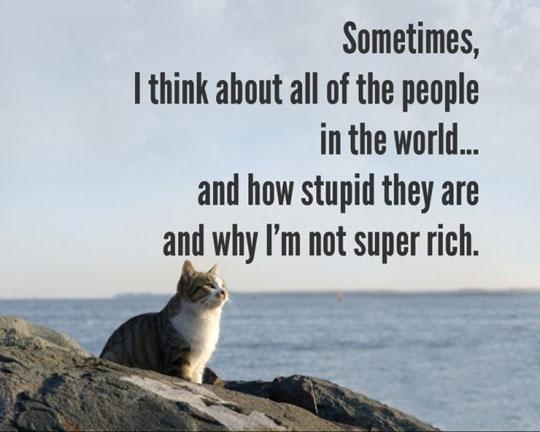 funny-cat-thinking-sea