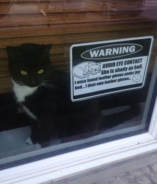 funny-cat-warning-sign-window