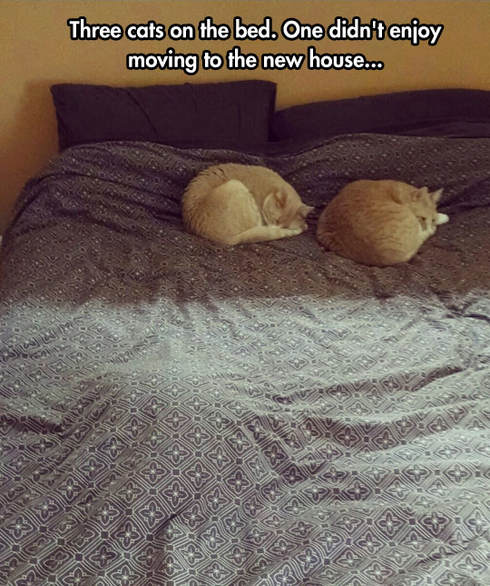 Three Cats On The Bed