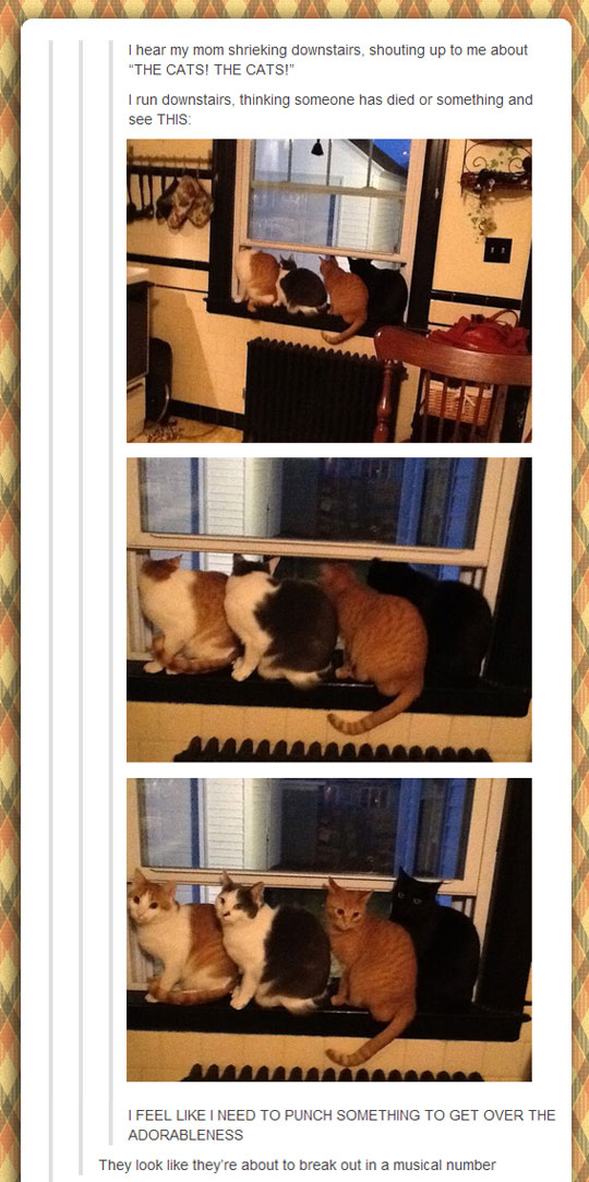 funny-cats-window-surprised-kitchen